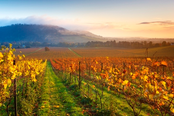 Credit Helen Dixon - autumn view - lo-res