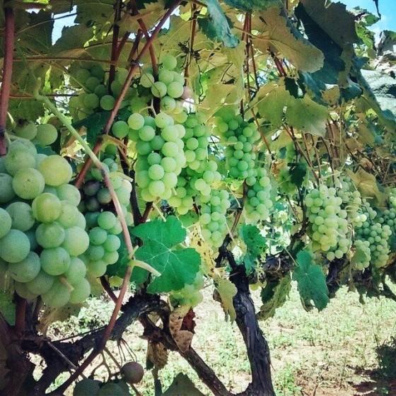 Roteiro do Vinho2