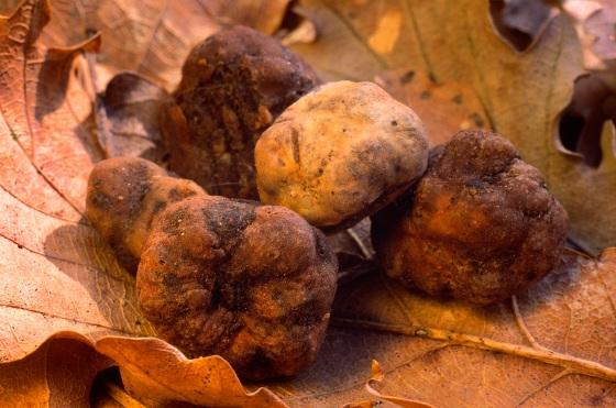 truffle 2.jpg